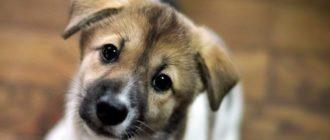 Цитаты про собак 1
