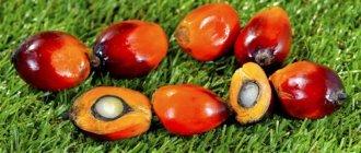 Вредно ли пальмовое масло? 9