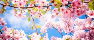 Статусы про весну 10