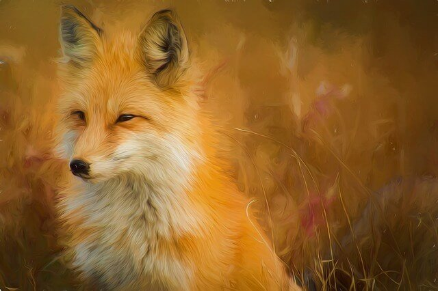 Цитаты про лис