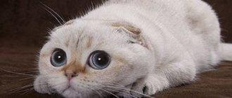 Анекдоты про котов 4