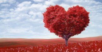 Цитаты про сердце 7
