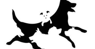 Тест на определение возраста вашего разума: сколько собак вы видите на картинке? 2
