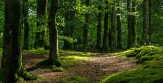 цитаты про лес