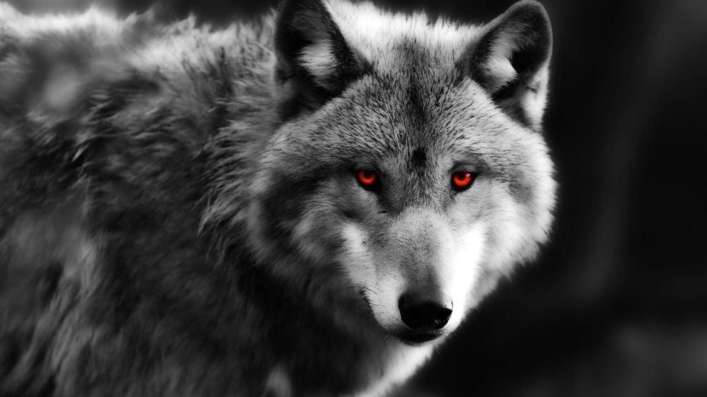 пацанские цитаты о волках