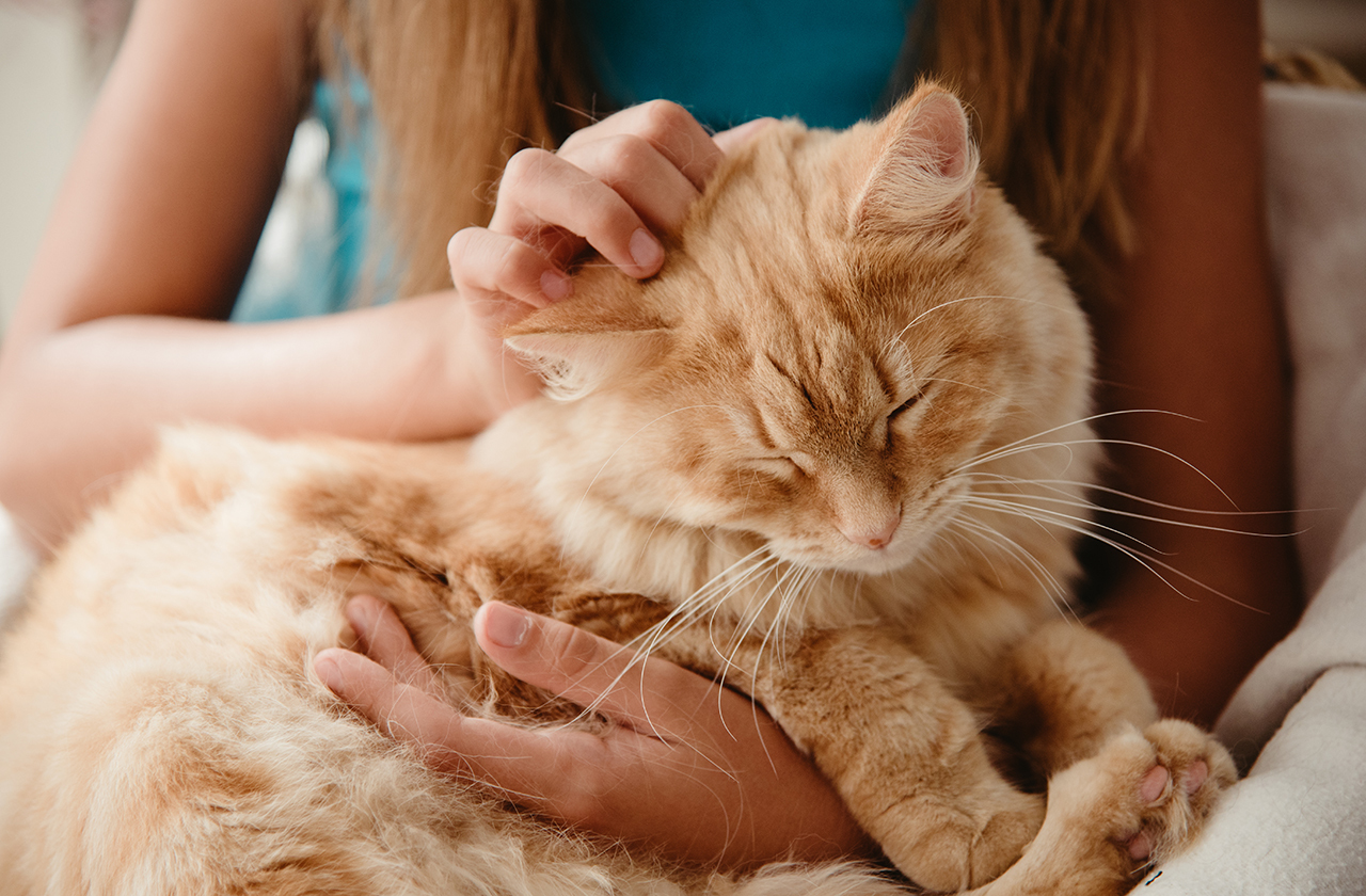 Почему коты мурчат